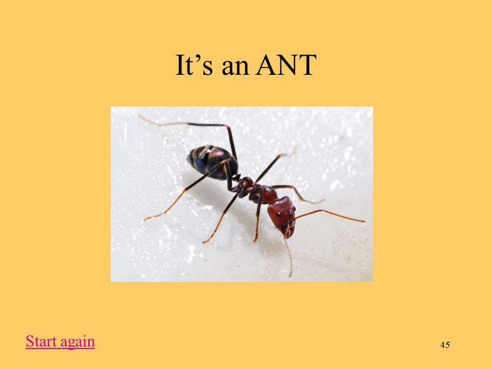 45 It's an ANT Start again