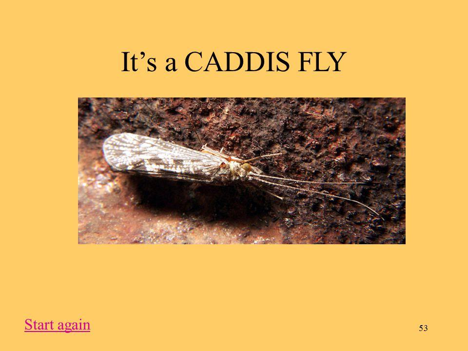 53 It's a CADDIS FLY Start again