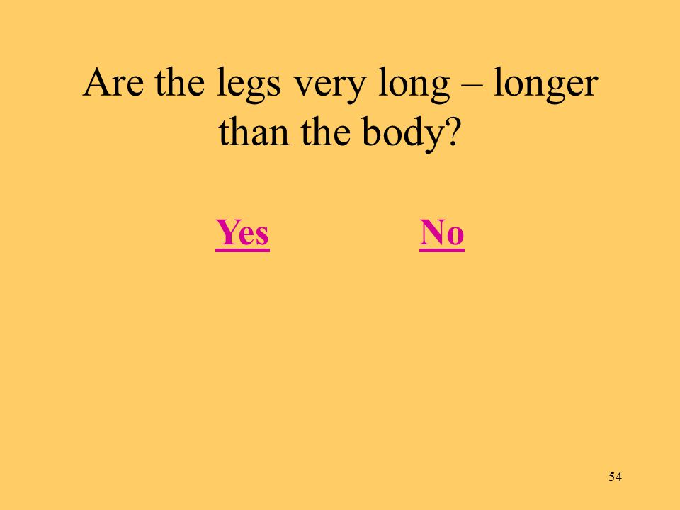 54 Are the legs very long – longer than the body YesNo