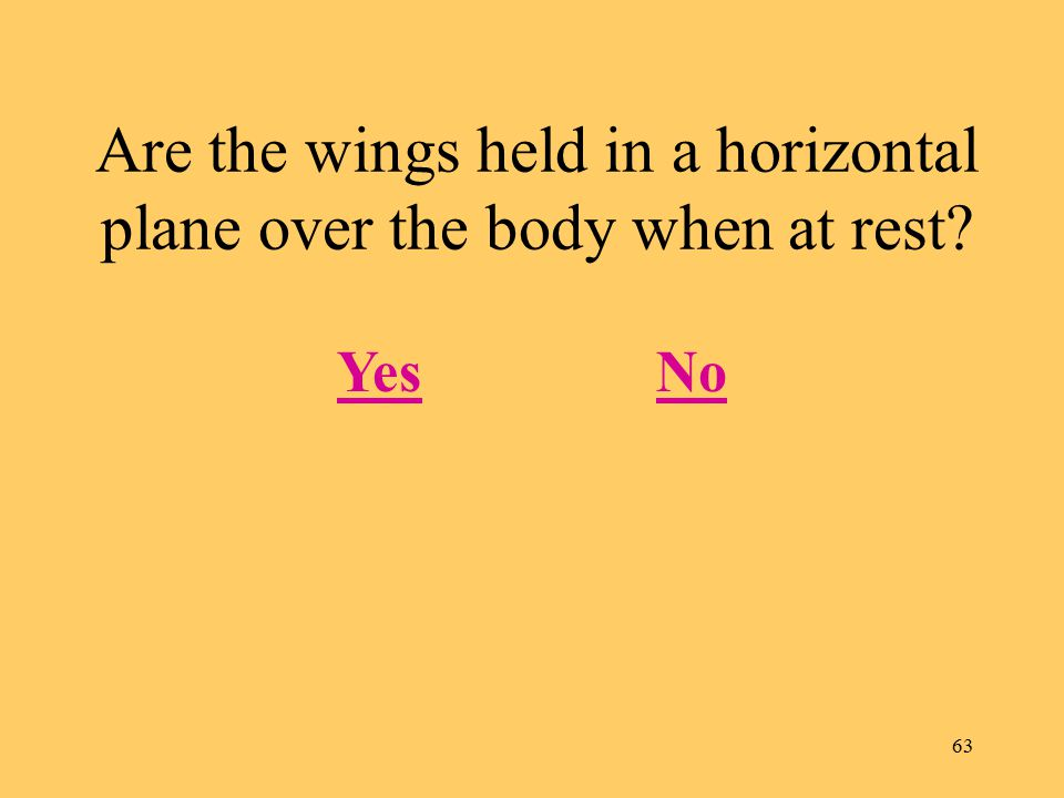 63 Are the wings held in a horizontal plane over the body when at rest? YesNo