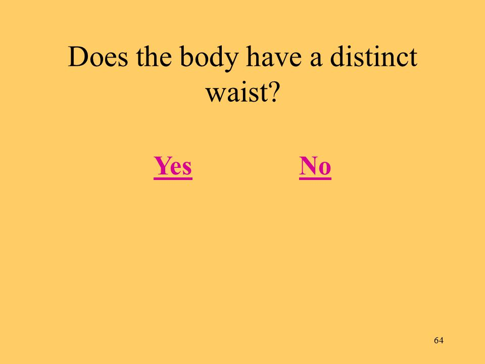 64 Does the body have a distinct waist? YesNo