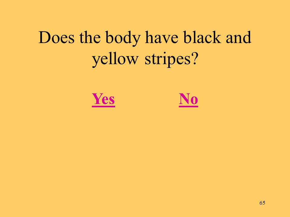 65 Does the body have black and yellow stripes? YesNo