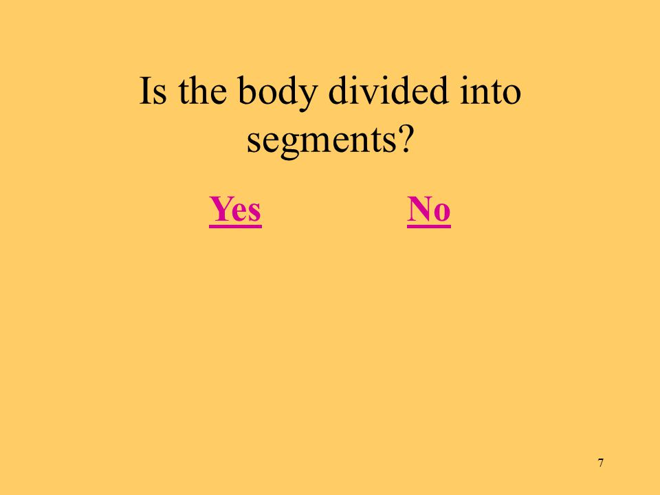 7 Is the body divided into segments YesNo
