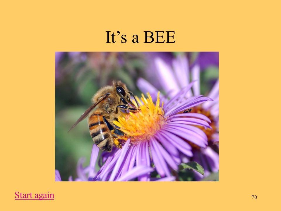 70 It's a BEE Start again