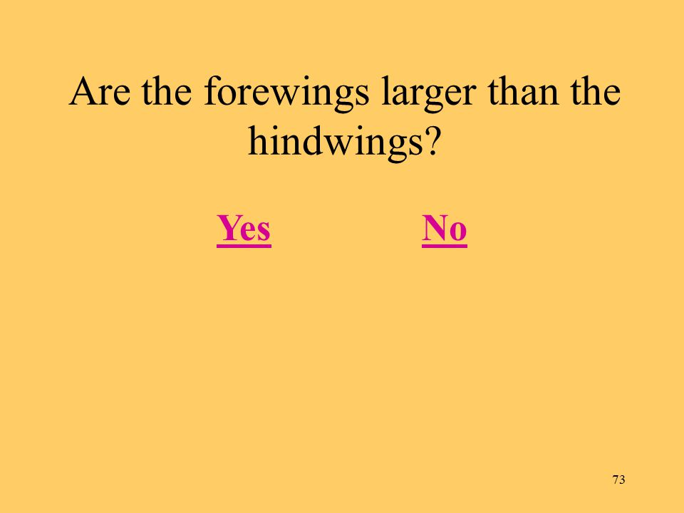 73 Are the forewings larger than the hindwings? YesNo