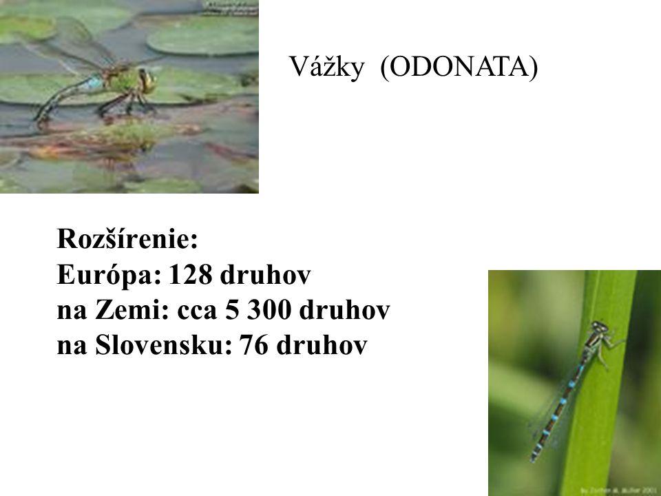 Odonata VáVžky Rozšírenie: Európa: 128 druhov na Zemi: cca 5 300 druhov na Slovensku: 76 druhov Vážky (ODONATA)
