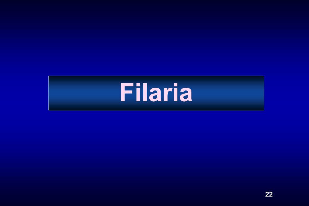 Filaria 22