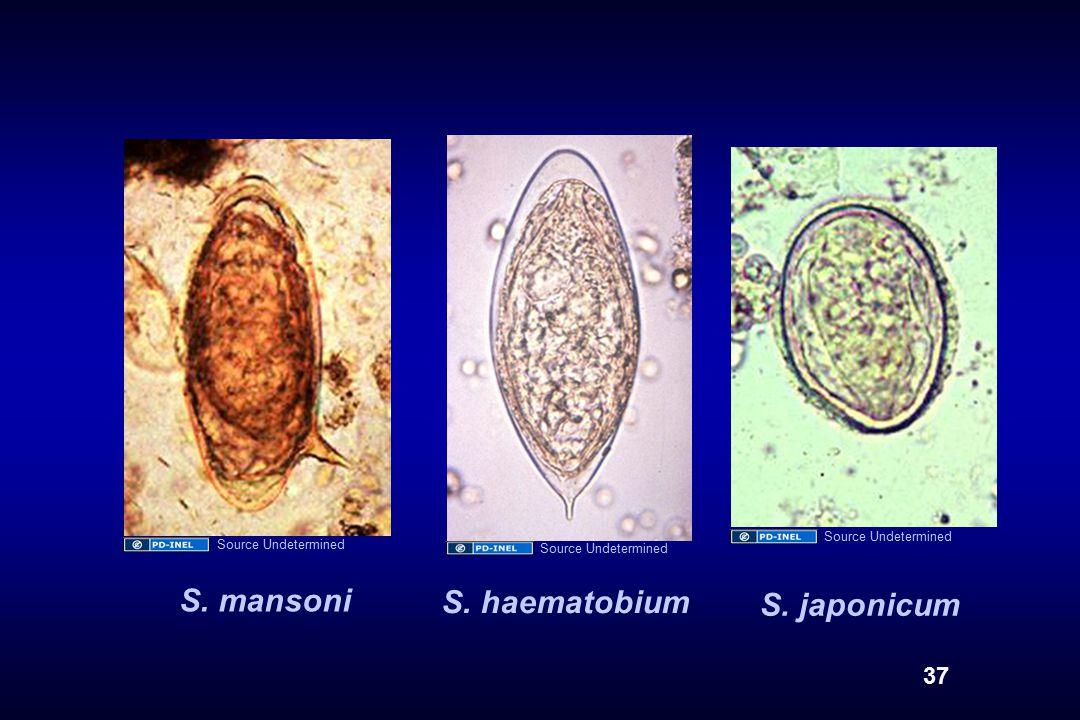 S. mansoni S. haematobium S. japonicum 37 Source Undetermined