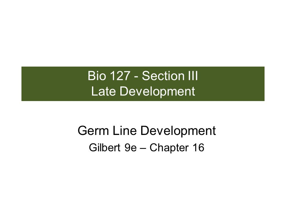 Bio 127 - Section III Late Development Germ Line Development Gilbert 9e – Chapter 16