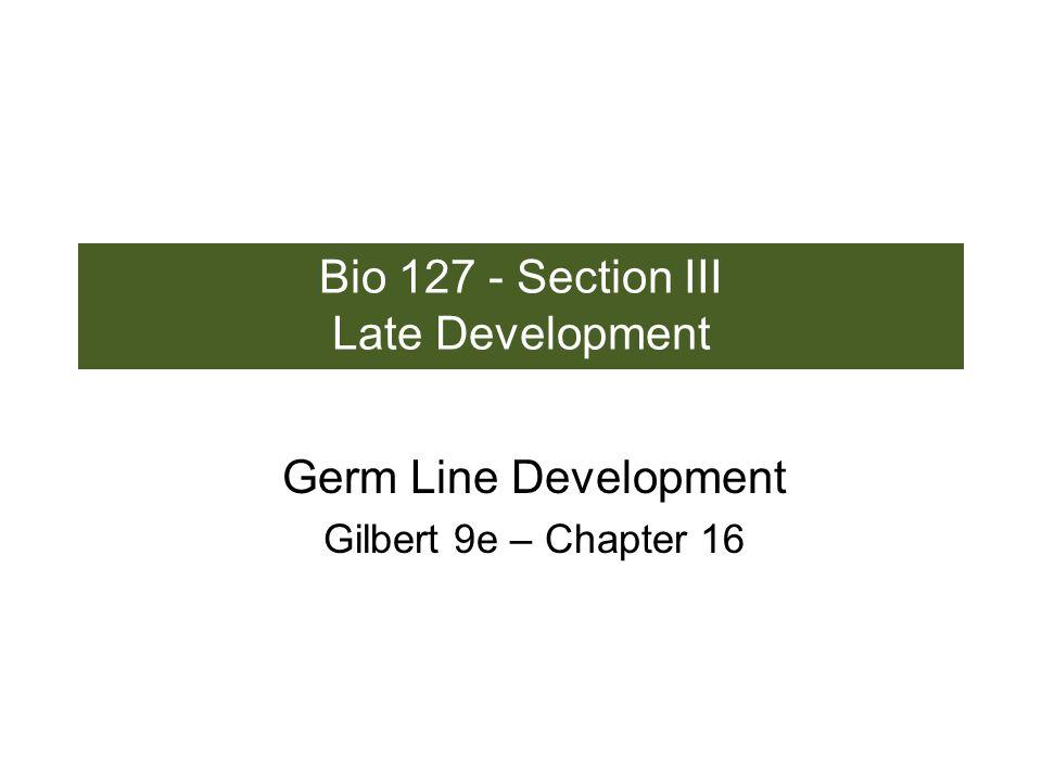 Germ Cell Migration: Drosophila anteriorposterior - mitochondria - fibrils - polar granules no transcription no translation germline stabilization