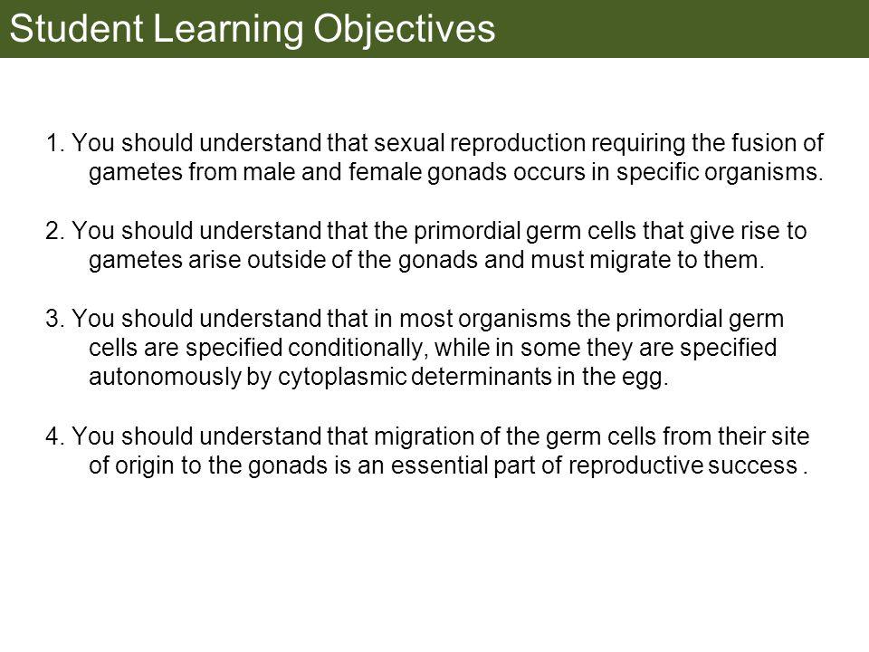 Germ plasm at the vegetal pole of frog embryos Marker for frog homolog of fly/worm translation blocker, Nanos