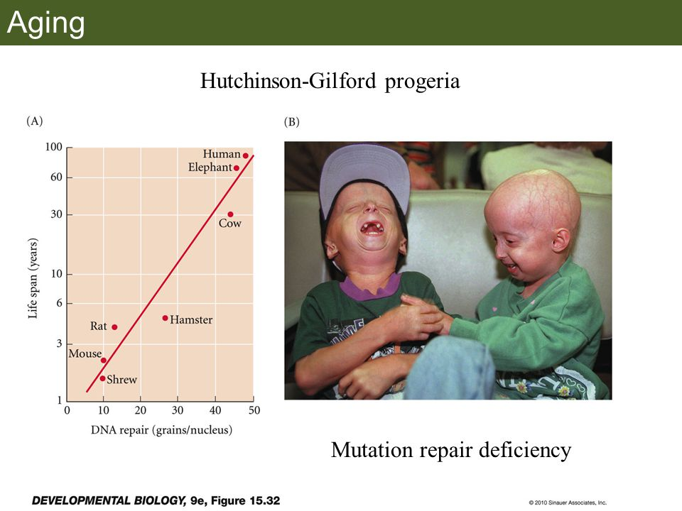 Aging Mutation repair deficiency Hutchinson-Gilford progeria