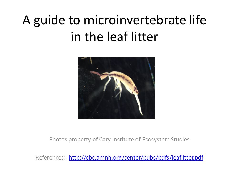A guide to microinvertebrate life in the leaf litter Photos property of Cary Institute of Ecosystem Studies References: http://cbc.amnh.org/center/pubs/pdfs/leaflitter.pdfhttp://cbc.amnh.org/center/pubs/pdfs/leaflitter.pdf