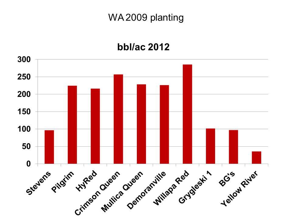 WA 2009 planting