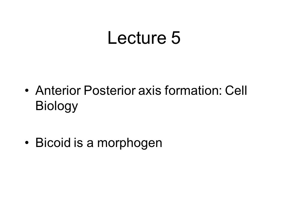 Lecture 5 Anterior Posterior axis formation: Cell Biology Bicoid is a morphogen