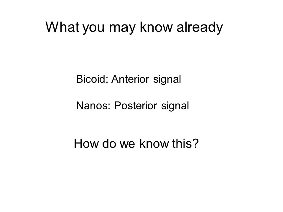 What you may know already Bicoid: Anterior signal Nanos: Posterior signal How do we know this