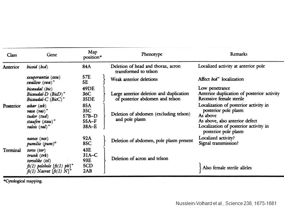 Nusslein-Volhard et al., Science 238, 1675-1681
