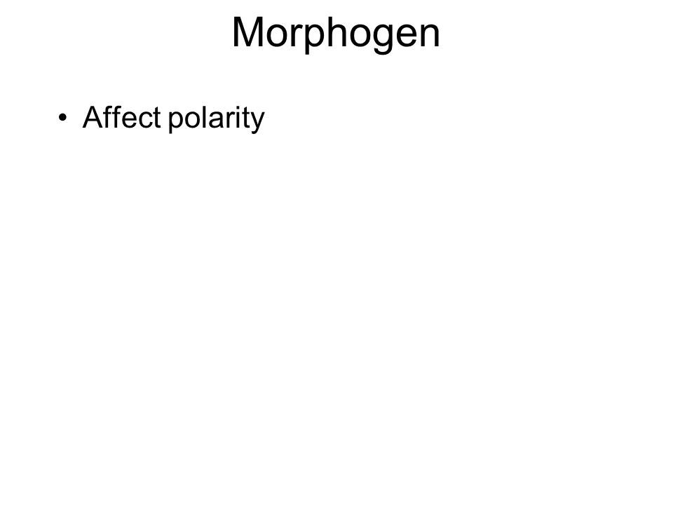 Morphogen Affect polarity
