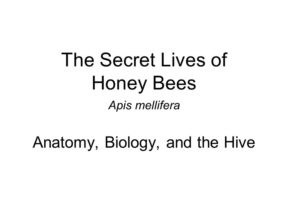 The Secret Lives of Honey Bees Apis mellifera Anatomy, Biology, and the Hive