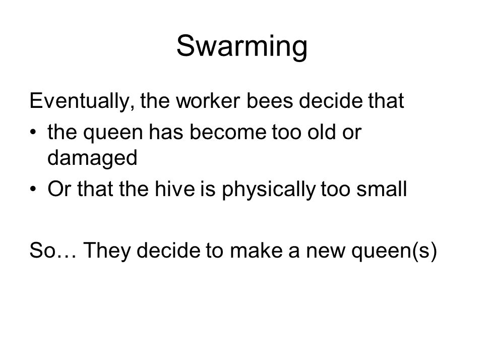Swarming Eventually, the worker bees decide that the queen has become too old or damaged Or that the hive is physically too small So… They decide to make a new queen(s)