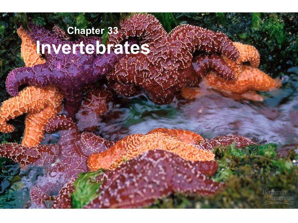 Phylum Ctenophora The Comb jellies Resemble cnidarian medusas. Use cilia for locomotion.