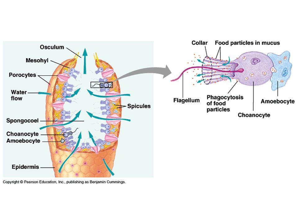 A bryozoan