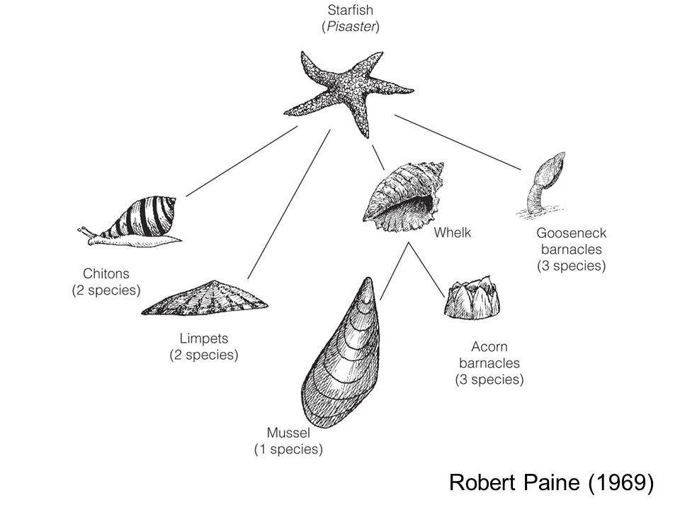 Robert Paine (1969)