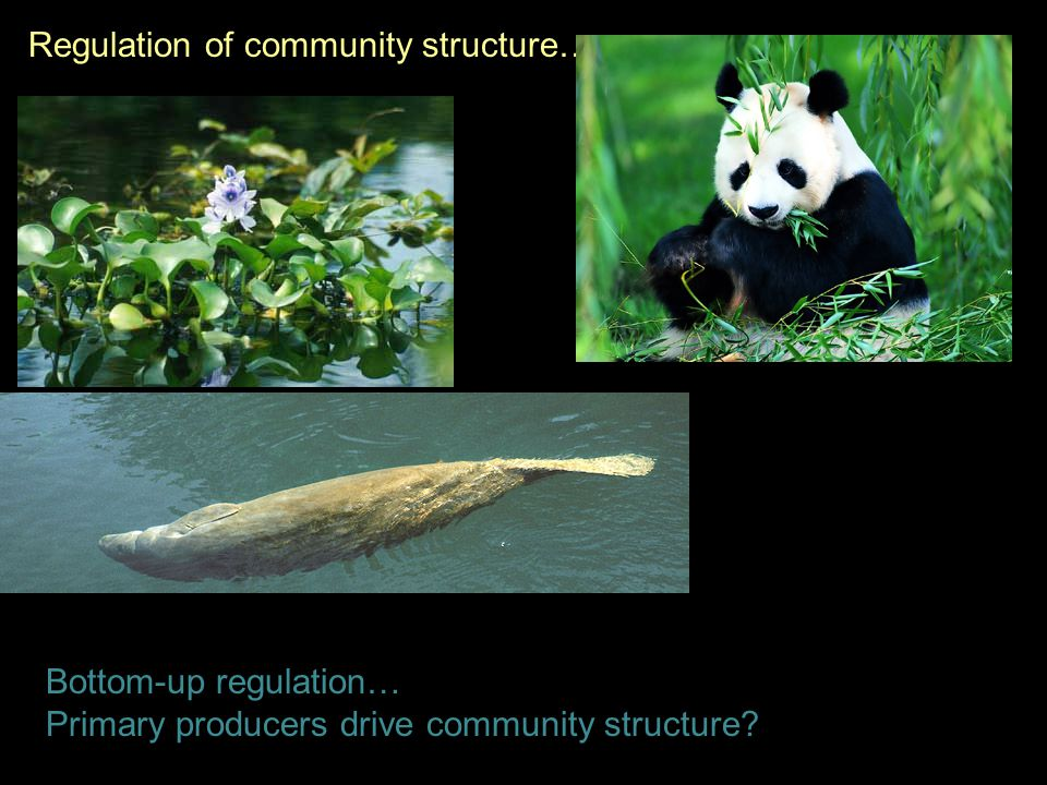Bottom-up regulation… Primary producers drive community structure.