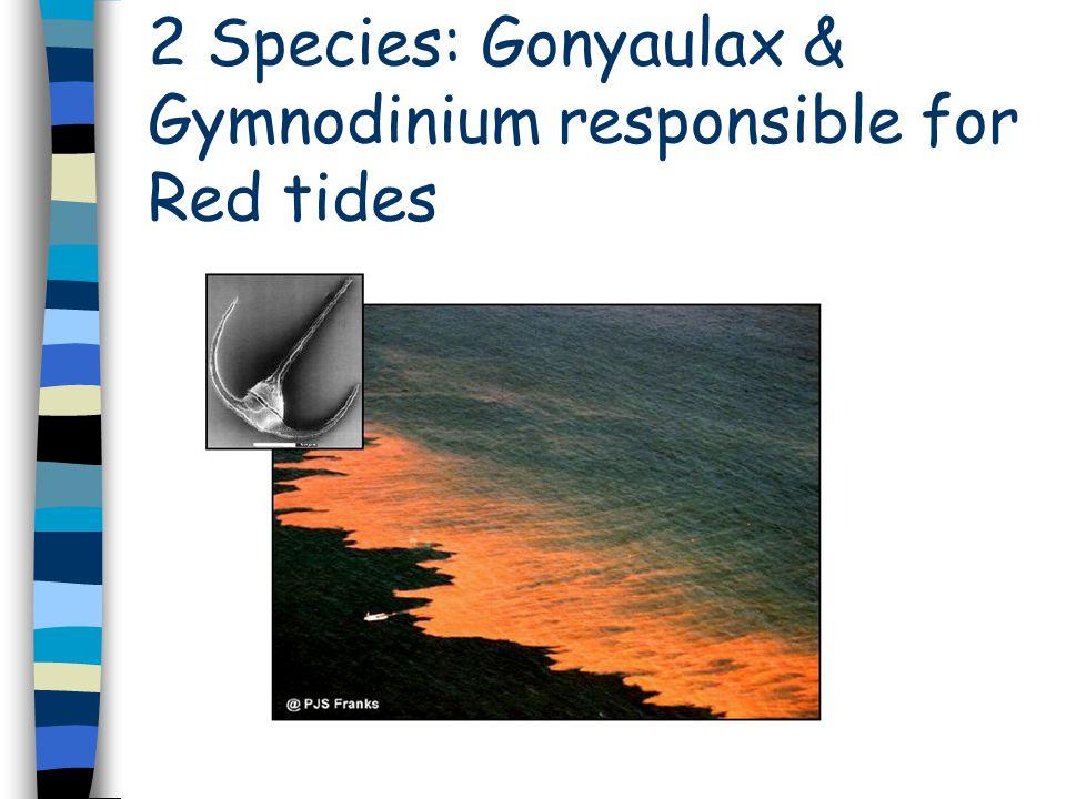 Dinoflagellates Propel themselves using 2 flagella Can swim like simple animals Photosynthesize like plants