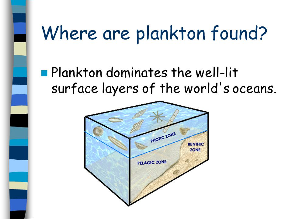 Where are plankton found? Plankton dominates the well-lit surface layers of the world s oceans.