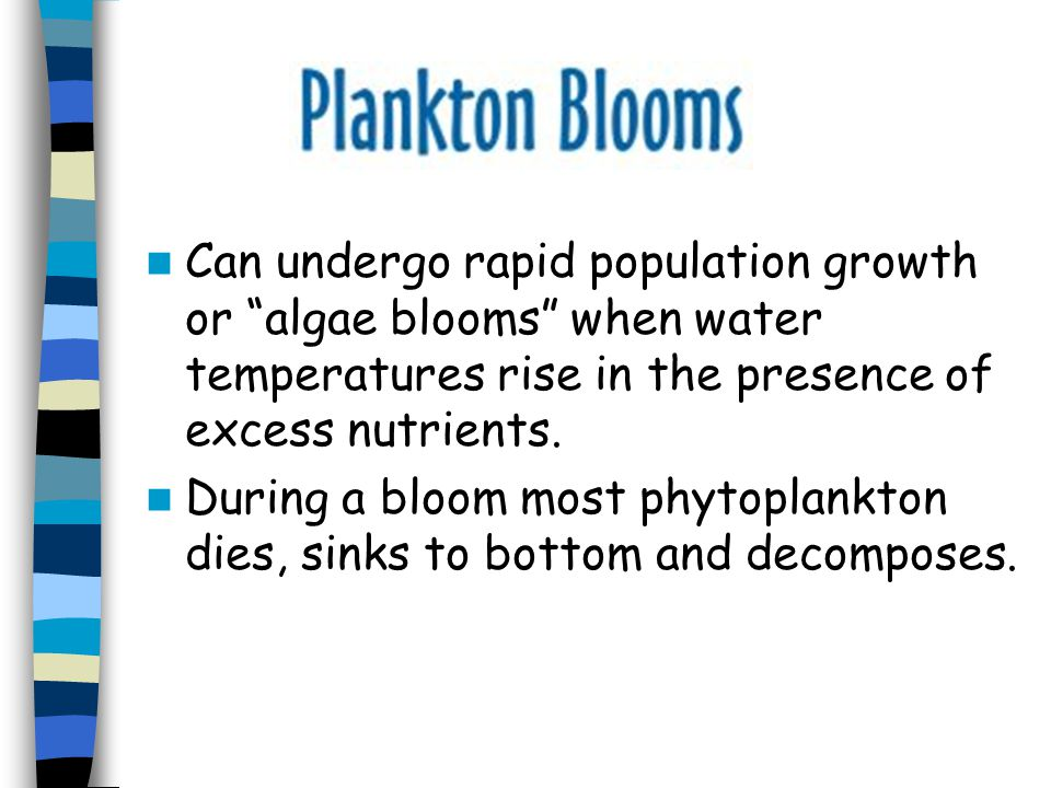 Can undergo rapid population growth or algae blooms when water temperatures rise in the presence of excess nutrients.