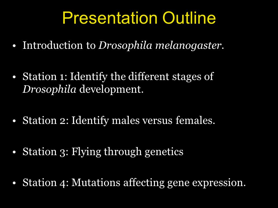 Presentation Outline Introduction to Drosophila melanogaster. Station 1: Identify the different stages of Drosophila development. Station 2: Identify