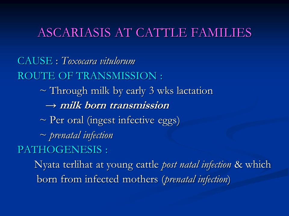 ASCARIASIS AT CATTLE FAMILIES CAUSE : Toxocara vitulorum ROUTE OF TRANSMISSION : ~ Through milk by early 3 wks lactation ~ Through milk by early 3 wks lactation → milk born transmission → milk born transmission ~ Per oral (ingest infective eggs) ~ Per oral (ingest infective eggs) ~ prenatal infection ~ prenatal infection PATHOGENESIS : Nyata terlihat at young cattle post natal infection & which born from infected mothers (prenatal infection) Nyata terlihat at young cattle post natal infection & which born from infected mothers (prenatal infection)