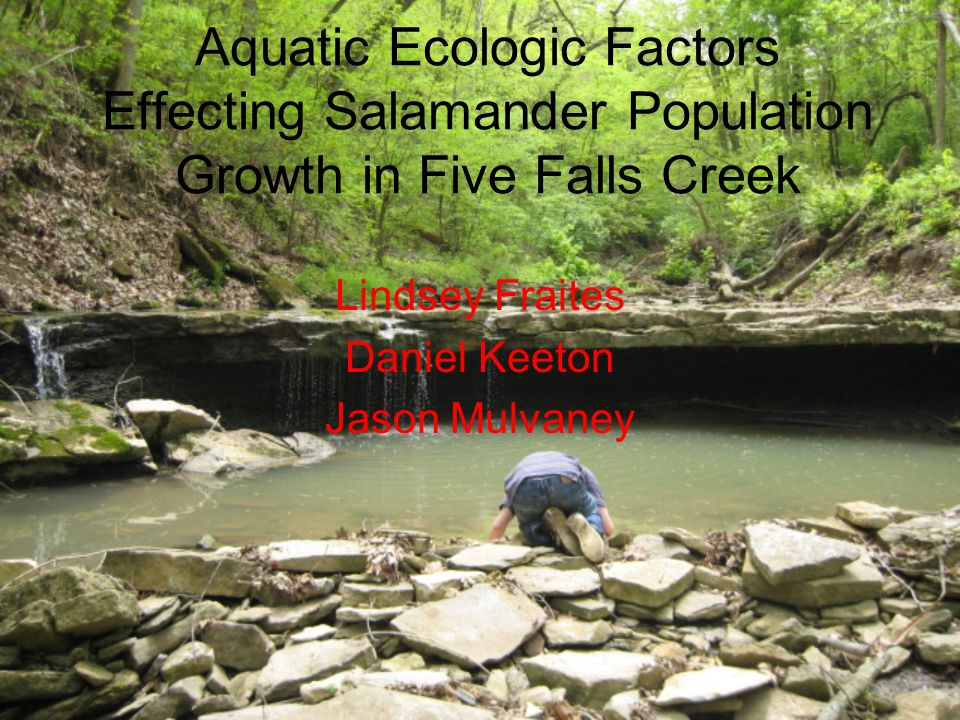 Aquatic Ecologic Factors Effecting Salamander Population Growth in Five Falls Creek Lindsey Fraites Daniel Keeton Jason Mulvaney
