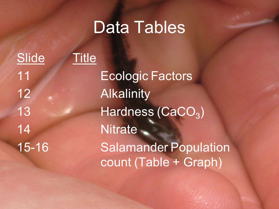 Data Tables SlideTitle 11Ecologic Factors 12Alkalinity 13Hardness (CaCO 3 ) 14Nitrate 15-16Salamander Population count (Table + Graph)