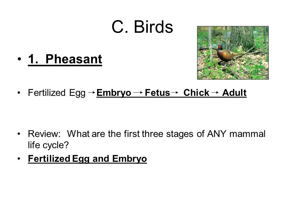 C. Birds 1.