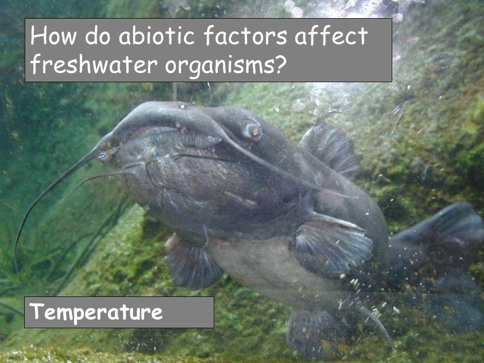 How do abiotic factors affect freshwater organisms Temperature