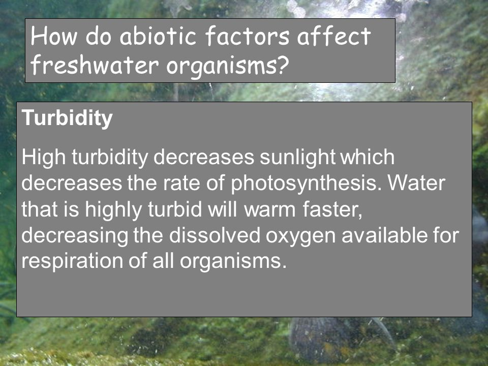 How do abiotic factors affect freshwater organisms.
