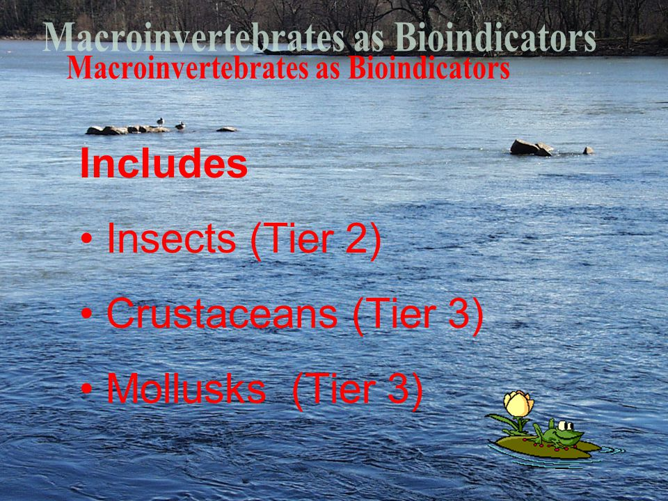 Includes Insects (Tier 2) Crustaceans (Tier 3) Mollusks (Tier 3)