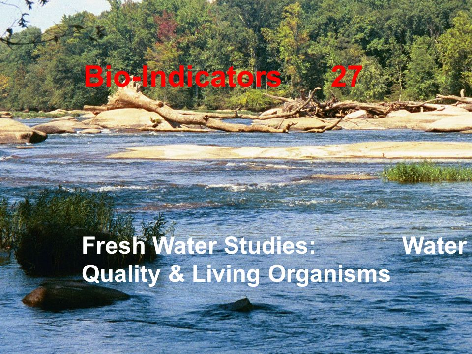 Bio-Indicators 27 Fresh Water Studies: Water Quality & Living Organisms