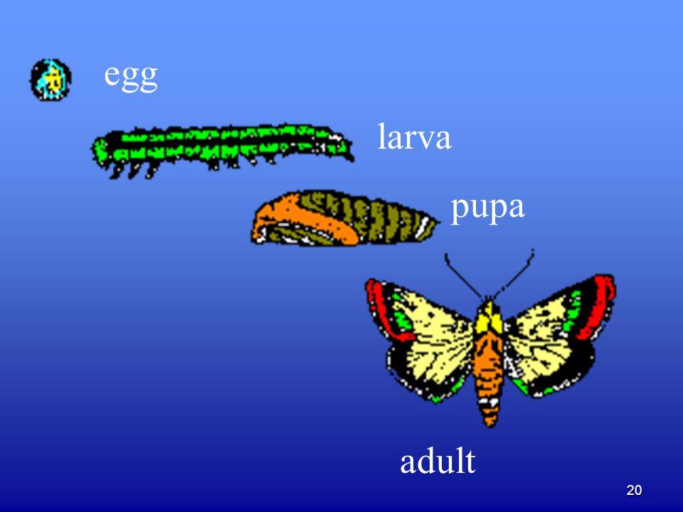 20 egg larva pupa adult