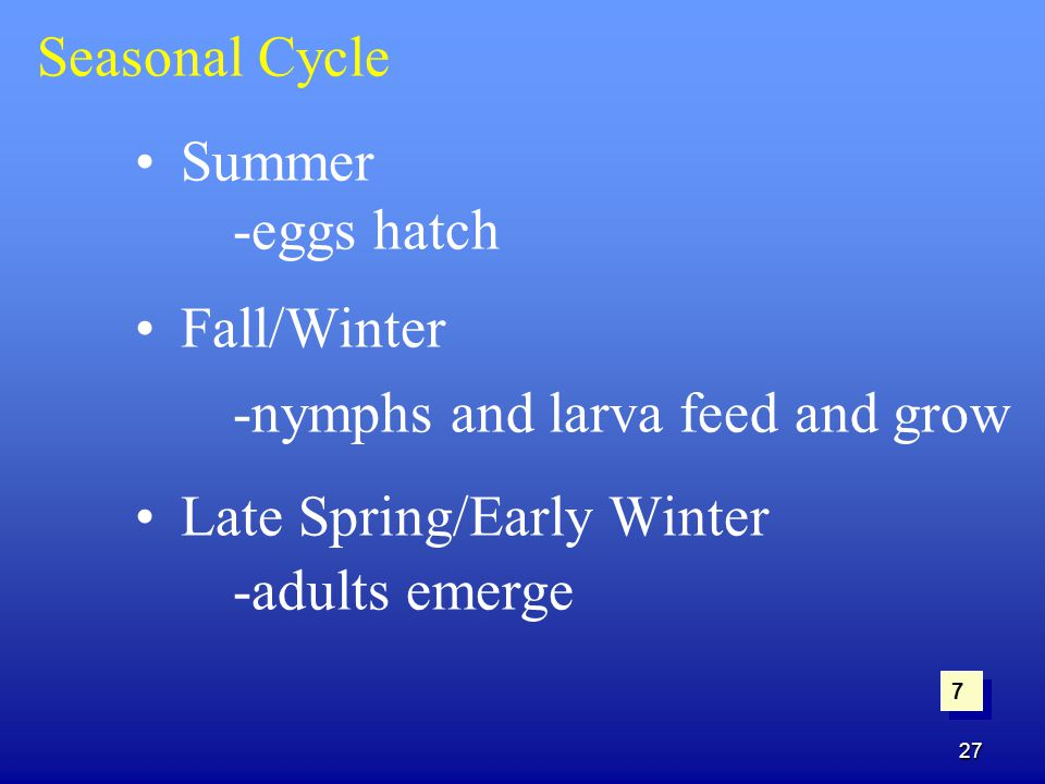 27 Seasonal Cycle Summer -eggs hatch Fall/Winter -nymphs and larva feed and grow Late Spring/Early Winter -adults emerge 7 7
