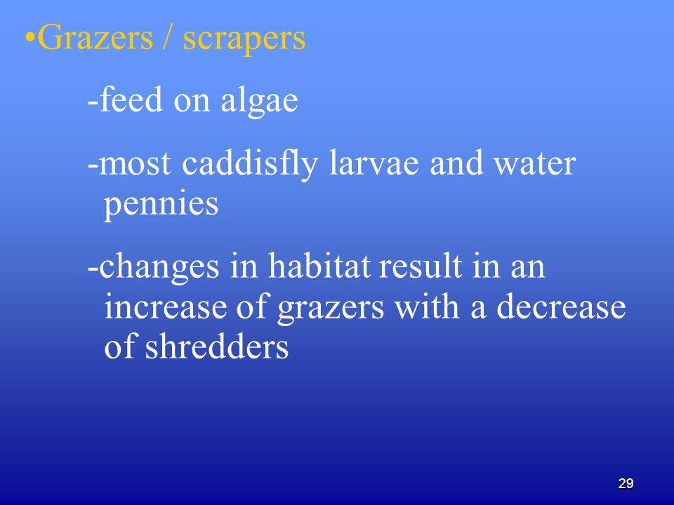 29 Grazers / scrapers -feed on algae -most caddisfly larvae and water pennies -changes in habitat result in an increase of grazers with a decrease of