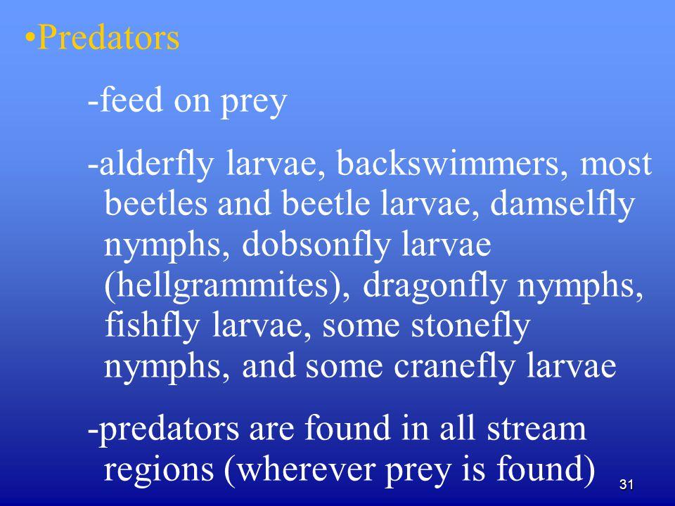 31 Predators -feed on prey -alderfly larvae, backswimmers, most beetles and beetle larvae, damselfly nymphs, dobsonfly larvae (hellgrammites), dragonf