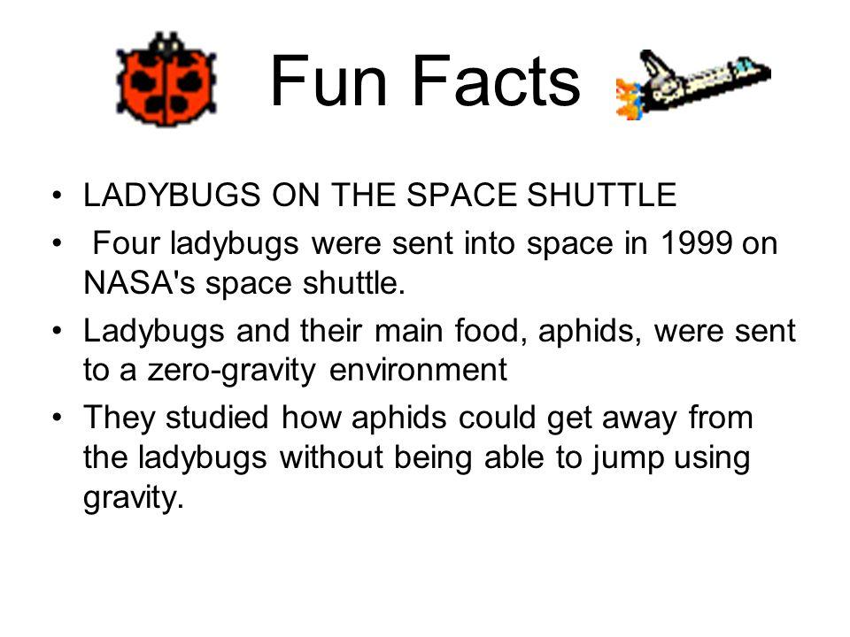 Work Cited msucares.com/.../images/ 040923ladybug200.jpg www.fcps.k12.va.us/ StratfordLandingES/Ecology http://www.celticbug.com/Real/Bugs4.html http://www.uky.edu/Agriculture/Entomology/ entfacts/fldcrops/ef105.htmhttp://www.uky.edu/Agriculture/Entomology/ entfacts/fldcrops/ef105.htm www.co.alameda.ca.us/.../beninsects.htm www.scottcamazine.com/.../ ladybugPupa_jpg.htm