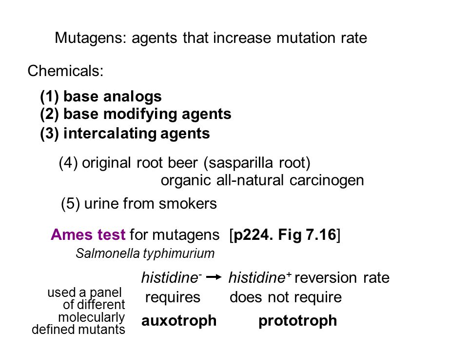 Mutagens: agents that increase mutation rate Chemicals: (1) base analogs (2) base modifying agents (3) intercalating agents (4) original root beer (sa