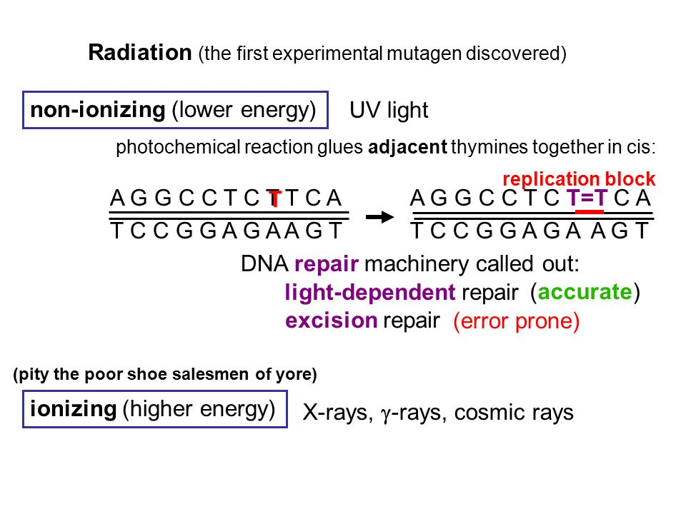 Radiation (the first experimental mutagen discovered) non-ionizing (lower energy) ionizing (higher energy) UV light photochemical reaction glues adjac