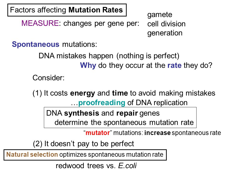 Spontaneous mutations: Factors affecting Mutation Rates Why do they occur at the rate they do? DNA mistakes happen (nothing is perfect) (1) It costs e