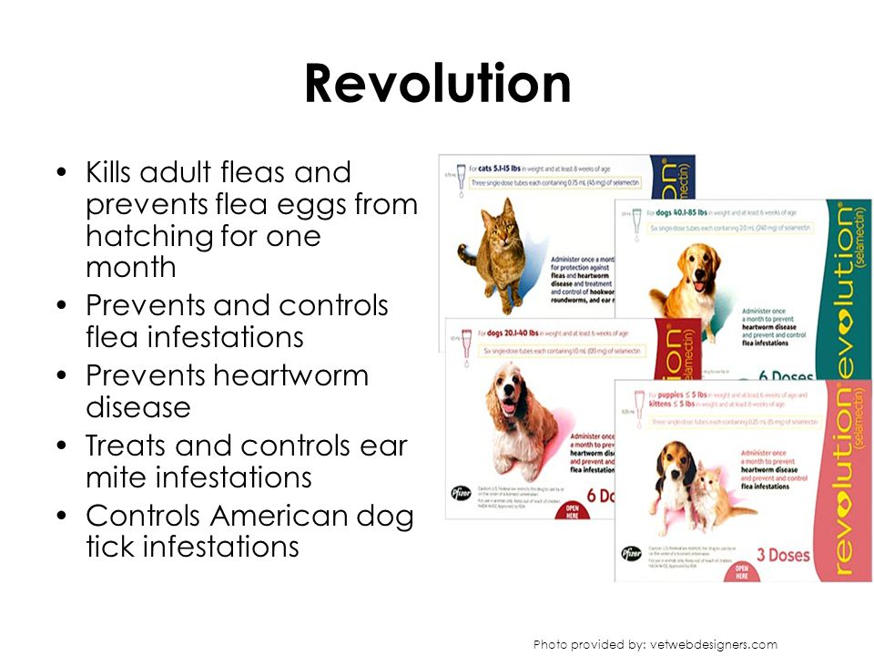 Revolution Kills adult fleas and prevents flea eggs from hatching for one month Prevents and controls flea infestations Prevents heartworm disease Tre