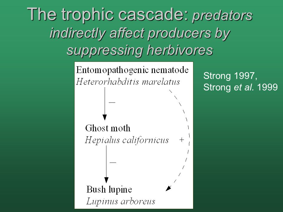 The trophic cascade: predators indirectly affect producers by suppressing herbivores Strong 1997, Strong et al.